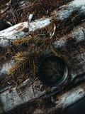 Forest Tea Imagen de archivo libre de regalías