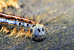 Forest tent caterpillar backside macro Stock Image