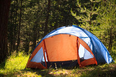 Forest with tent Stock Photography