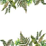 Forest tern watercolor wreath frame design with place for date and text. Bracken grass green border, Forest fern illustration. Forest tern watercolor wreath royalty free illustration