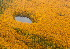 Forest terrain with lake in autumn, top view Royalty Free Stock Photo