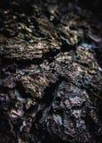 Forest Textures royalty-vrije stock afbeelding