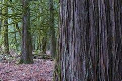 Forest Textures Foto de archivo libre de regalías