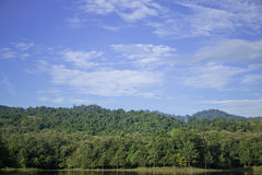 Forest in Thailand. Beautyful Forest in Saraburi - Thailand Royalty Free Stock Images