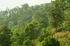 Forest in thailand. Hill ever green forest in thailand Royalty Free Stock Photography