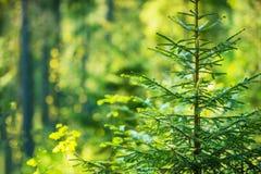 Forest Theme crescente Fotografie Stock