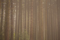 Forest Themed Background Royalty-vrije Stock Afbeelding