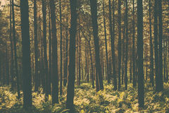 Forest Themed Background Royalty-vrije Stock Foto