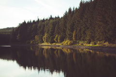 Forest Themed Background Stock Photo