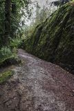 In the forest, there is a path covered with a small stone. On the right is a stone wall covered with moss. Natural park `Monrepo` in the city of Vyborg. Russia Royalty Free Stock Image