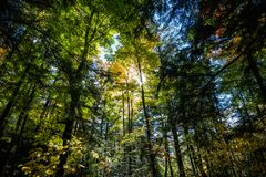 Frame filled scene of forest vegetation stock photography