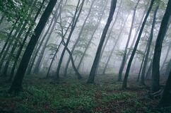 Forest with thick fog Royalty Free Stock Photos