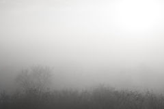 Forest in thick and mysterious fog Royalty Free Stock Image