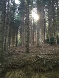 Sun shining through forest Royalty Free Stock Photo
