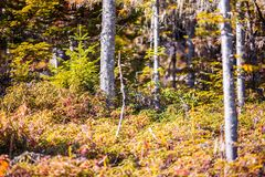 Forest thicket in autumn Royalty Free Stock Photos