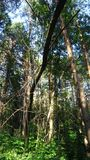 Forest thicket Royalty Free Stock Photos