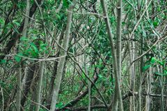 Forest thickets Royalty Free Stock Photos