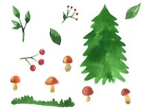 Forest things. Set of elements for design. Spruce, mushrooms, berries, branches. Hand drawn watercolor illustration. Isolated on vector illustration
