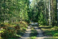 Forest thrown path stock images