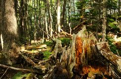 Forest of Tierra del Fuego National Park Royalty Free Stock Photography