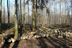 Forest timber harvesting Royalty Free Stock Images