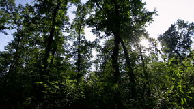 Forest time lapse DSLR HDR with blue sky and moving clouds stock video footage