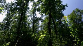 Forest time lapse DSLR HDR with blue sky and moving clouds stock footage