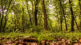 Forest timelapse stock video footage