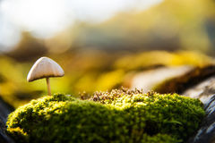 Forest toadstool Stock Image