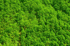 Forest top view Royalty Free Stock Photo