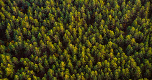 Forest top view Royalty Free Stock Photos