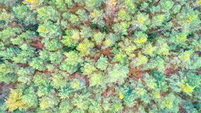 Forest top view Stock Images