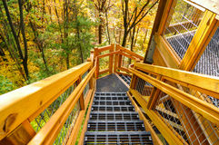 Forest tower steps Royalty Free Stock Images