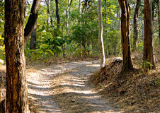 Forest Track. A forest road in Pench Tiger Reserve in India Stock Photo