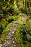 Forest Track. Stone path through dense ancient New Zealand Forest Stock Photo