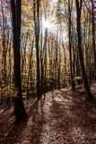 Forest Track in Autumn royalty free stock image