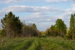 Forest track in the distance in the Siberian mixed forest royalty free stock image
