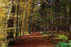 Forest track fall colors. A track in a mixed forest at fall. Indian summer in German woods Royalty Free Stock Images