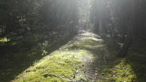 Forest track royalty free stock photography
