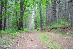 Forest track. A picture of a forest track taken low down Royalty Free Stock Photos