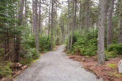 The forest track at Pretty Marsh on Mount Desert in Maine Stock Photos