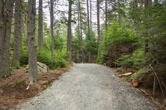 The forest track at Pretty Marsh on Mount Desert in Maine. Pretty Marsh on Mount Desert in Maine USA Stock Images