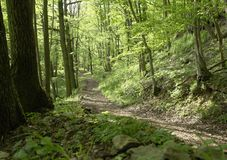 Forest track un sunny ambiance Stock Image