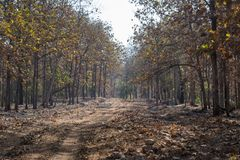 Forest Track of  Wildlife Sanctuary Royalty Free Stock Photography