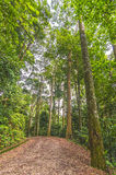 Forest trackway Stock Photo