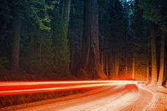 Forest Traffic at Night Stock Images
