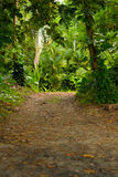 Forest Trail. Forest Trai at Gandonca National Park Stock Image