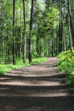 Forest Trail. Path winds through a lush green forest Stock Photo