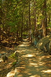Forest Trail. Going through the Yosemite National Park, California, USA Royalty Free Stock Photos