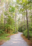 Forest trail Royalty Free Stock Photos
